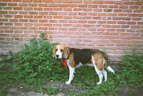 perro-diego-etxeberria